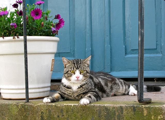 kočka před domem